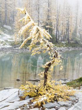 Washington State, Alpine Lakes Wilderness. Enchantment Lakes, larch trees and snow by Jamie & Judy Wild