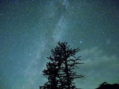 Washington State, Alpine Lakes Wilderness, Ingalls Pass, Milky Way and trees by Jamie & Judy Wild