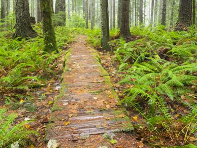Washington State, Tiger Mountain State Forest, Old foot wood bridge by Jamie & Judy Wild
