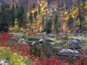 Wenatchee River and Fall Color, Tumwater Canyon, Washington, USA by Jamie & Judy Wild