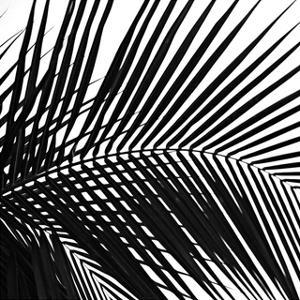 Palms 10 (detail) by Jamie Kingham