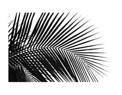 Palms 10 by Jamie Kingham