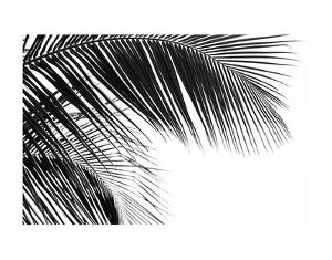 Palms 11 by Jamie Kingham