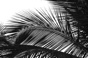 Palms 13 by Jamie Kingham