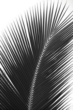 Palms 14 by Jamie Kingham