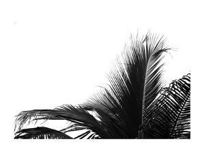 Palms 2 by Jamie Kingham