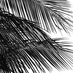 Palms 4 (detail) by Jamie Kingham