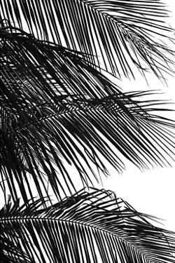 Palms 4 by Jamie Kingham