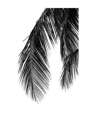 Palms 5 by Jamie Kingham