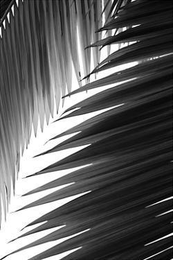 Palms 6 by Jamie Kingham
