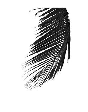 Palms 8 by Jamie Kingham