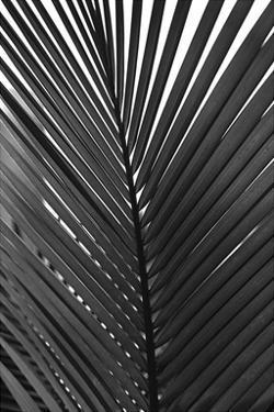 Palms 9 by Jamie Kingham