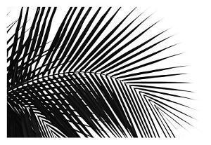 Palms, no. 10 by Jamie Kingham