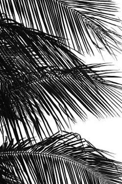 Palms, no. 4 by Jamie Kingham
