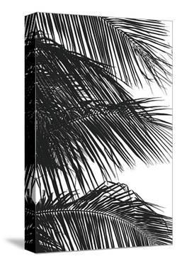 Palms, no. 4 by Jamie Kingham