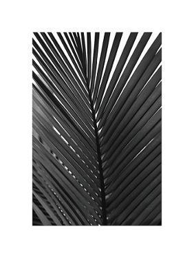 Palms, no. 9 by Jamie Kingham