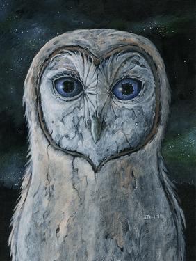 Barn Owl III by Jamin Still