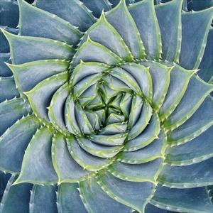 Spiral Succulent by Jan Bell