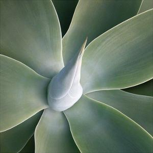 Succulent Tip by Jan Bell