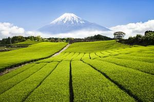 Green Tea plantation in Shizuoka with Mount Fuji in the background, Shizuoka Prefecture, Japan by Jan Christopher Becke