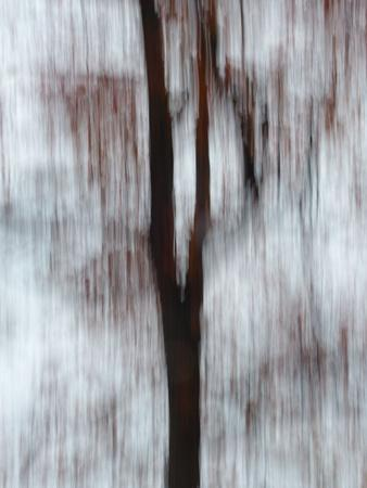 Blurred image of foliage achieved by panning the camera during time exposure