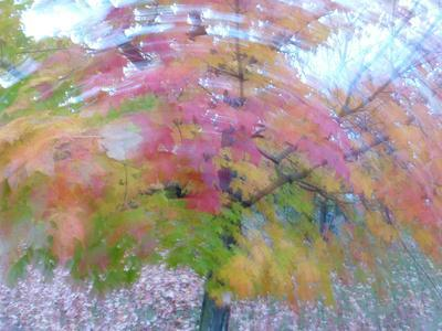 Blurred image of foliage achieved by rotating the camera during time exposure