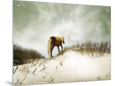 Chocolate Horse Walking through Sand by Jan Lakey
