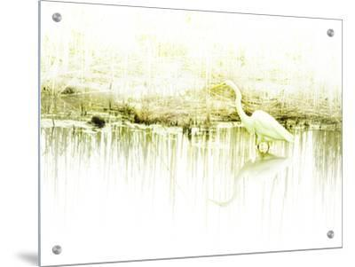 Crane Standing in Shallow Waters by Jan Lakey