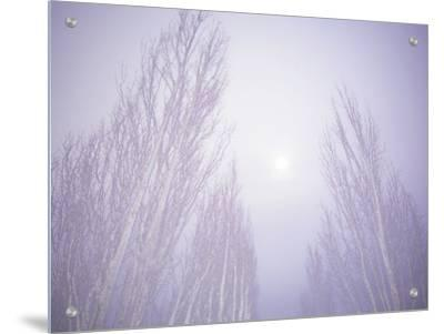 Dense Fog Obscuring Trees and Moonlight by Jan Lakey