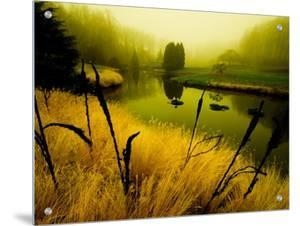 Golden Plant Growth along Peaceful River by Jan Lakey