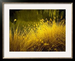 Golden Plants along River with Reflections of Trees by Jan Lakey