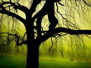 Green and Golden Landscape behind Tree by Jan Lakey