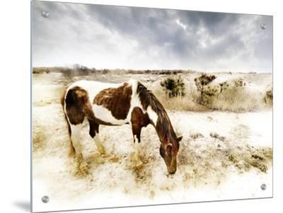 Horse Feeding off Dry Brush Growing out of Sand by Jan Lakey