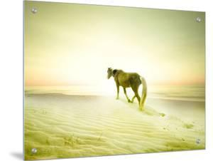 Horse Trudging through the Sand by Jan Lakey
