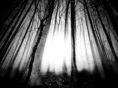 Sunlight Shining through Dense Forest by Jan Lakey