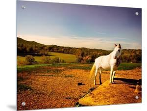 White Horse Fenced into Countryside Pen by Jan Lakey