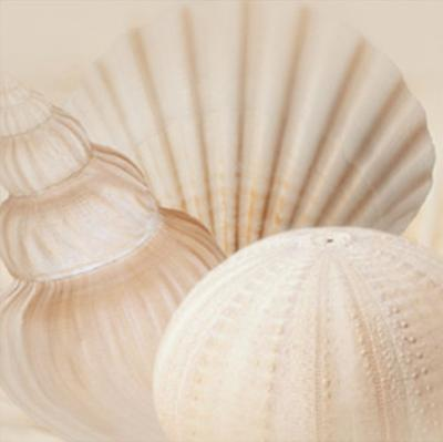 Shells III by Jan Lens