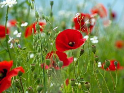 Wild Flowers in Summer by Jan Marijs