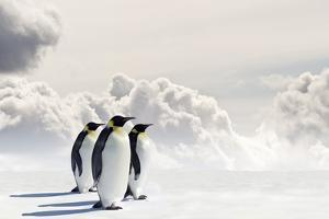 Emperor Penguins In Antarctica by Jan Martin Will