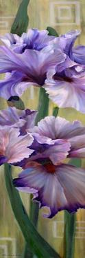 Iris I by Jan McLaughlin