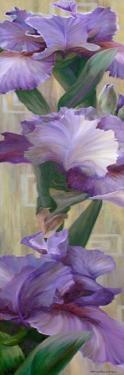 Iris II by Jan McLaughlin