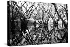 Tree Symphony by Jan Michael Ringlever
