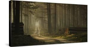 A Forest Walk by Jan Paul Kraaij