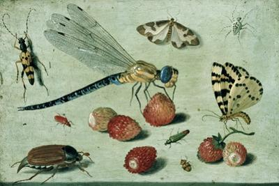 A Dragon-Fly, Two Moths, a Spider and Some Beetles, with Wild Strawberries, 17th Century by Jan Van Kessel