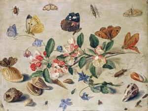 A Study of Flowers and Insects by Jan Van Kessel