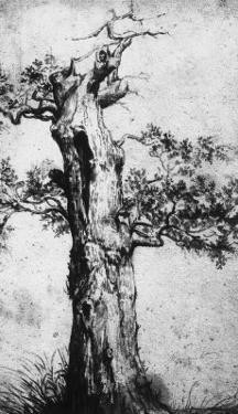 Study of a Tree, Royal Library, Turin by Jan Wijnants