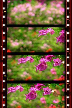 Old Film by janaka Dharmasena