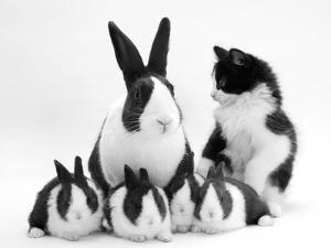 Blue Dutch Rabbit and Four 3-Week Babies and Black-And-White Kitten by Jane Burton