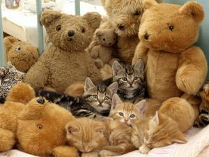 Domestic Cat, Five Kittens in Cot with Teddy Bears by Jane Burton