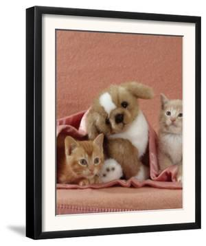 Domestic Cat, Ginger and Cream Kittens with Toy Puppy in a Pink Blanket, Bedroom by Jane Burton
